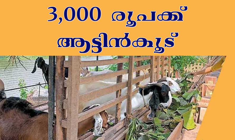 3000 രൂപക്ക് ചെറിയ ആട്ടിൻകൂട്